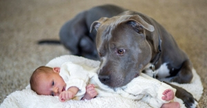 blue pittie and baby copy