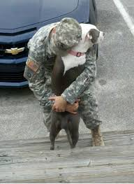 military pittie 3 - pinterest