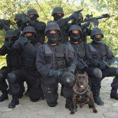 military pittie 7- special ops - pinterest